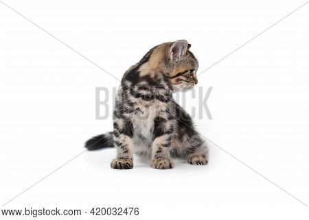 Cat Pictures, Cat Eyes, Pictures Of The Most Beautiful Cat, Cute Cat, Street Cat, Beautiful Cat Back