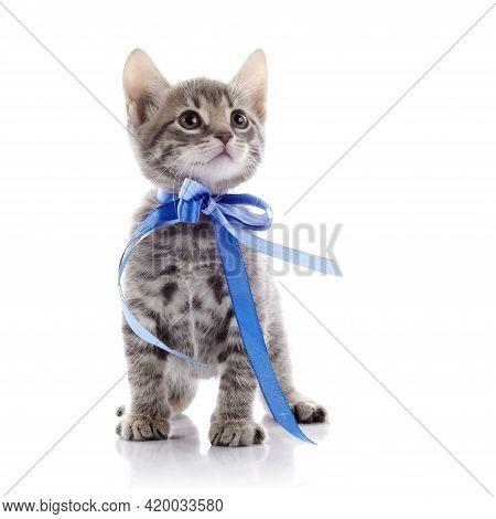 Striped Not Purebred Kitten. Amusing Gray Kitten. Kitten On A White Background. Small Predator. Smal