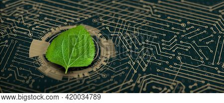 Green Leaf On The Converging Point Of Computer Circuit Board. Nature With Digital Convergence And Te