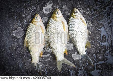 Silver Barb Fish On Ice,  Java Barb Carp Fish On Market Food On Dark Background, Fresh Fish Top View