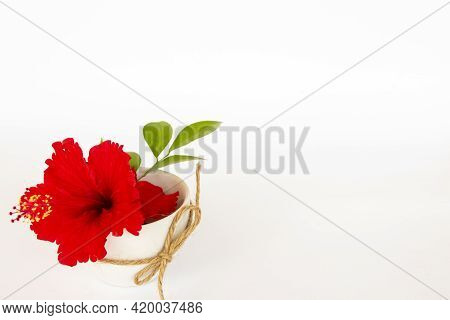 Red Hibiscus Local Flora Of Asia In Cup Arrangement Flat Lay Postcard Style On Background White