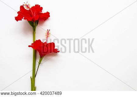 Red Hibiscus Local Flora Of Asia Arrangement Flat Lay Postcard Style On Background White