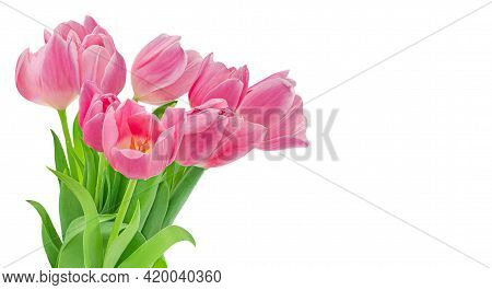 Spring Flowers. Flowers Bouquet With Pink Tulips Isolated On White Background.