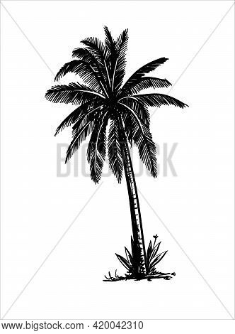 Three Palm Trees Grow On A Wild Beach. Vector Sketch On White Background