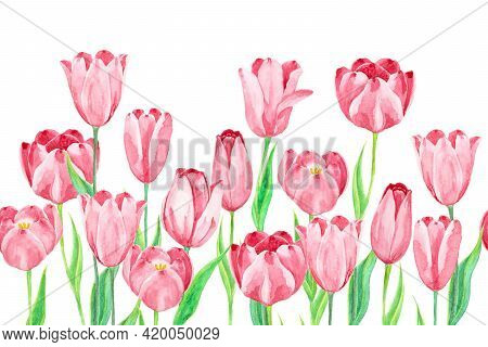 Pink Tulip Flower Plant And Green Leaf, Illustration Watercolor Drawing, Objects Isolated On White B