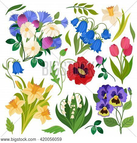 Flowers Bouquet. Wildflowers Meadow Plants. Chamomile, Clover And Daffodil, Poppy And Lily Of The Va