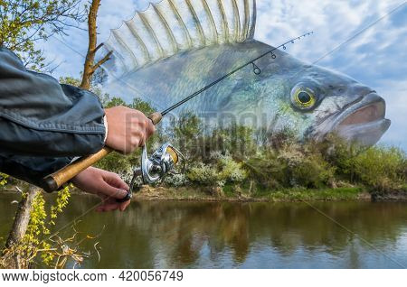 Perch Fishing. Photo Collage Of Angler Hands With Spinning Rod On Soft Focus Perch Fish On River Bac