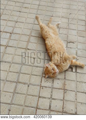 Beautiful Ginger Cat Lounging On The Concrete Pavement On A Warm Afternoon