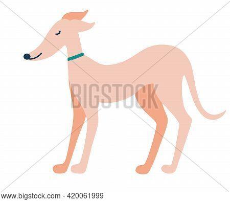 Greyhound Dog. English Dog. Greyhounds Characters. Beautiful Graceful Dog Stands. Flat Vector Illust