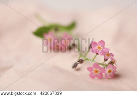 Beautiful Forget-me-not Flowers On Parchment, Closeup. Space For Text