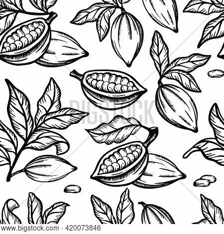 Cocoa Monochrome Fruit Bean And Leaves With Branches Of Theobroma Tree Monochrome Design Hand Drawn