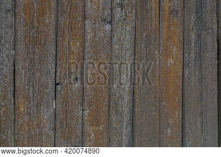 Gray Dry Wooden Planks Wall Surface With Orange Lichen Texture And Background