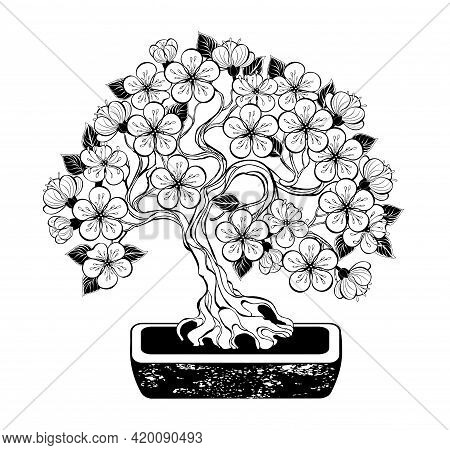 Contour Bonsai,  Flowering Japanese Cherry Tree With Curved Trunk And Artistically Drawn, Contoured,