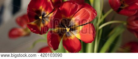 Banner With Close Up Bouquet Of Red Tulips On Gray Textured Background. Fading Red Tulips On A Gray