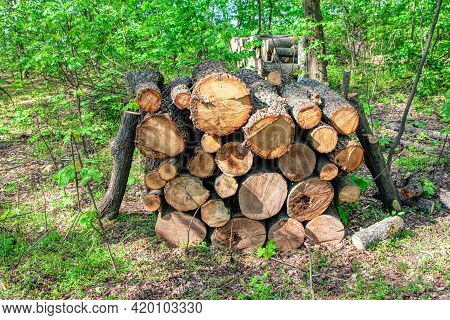 Stack Of Logs In The Forest . Pile Of Wood Logs