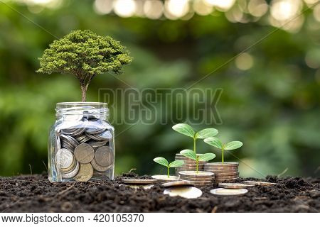 The Tree Is Growing With A Lot Of Money And A Piggy Bank Growing Out Of The Soil In The Morning Sun,