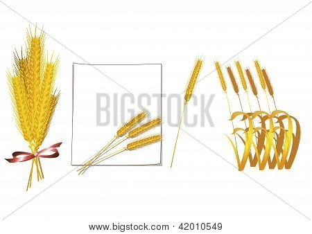 Bunch of wheat vector
