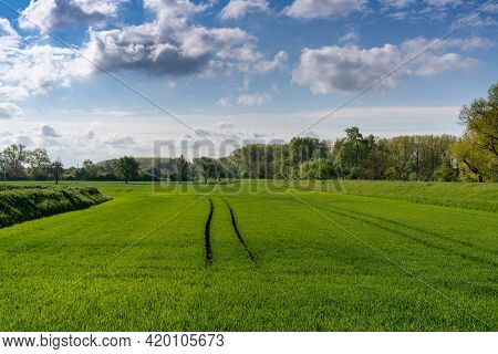 View Of An Idyllic Springtime Farm Field With Tractor Tracks And Forest Under A Blue Sky With White