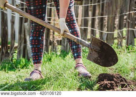 Woman Digs Earth With A Shovel In Her Garden In The Village