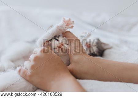 Hands Holding Cute Sleeping Little Kitten On Soft Bed. Adoption Concept. Sweet Kitten Portrait In Be