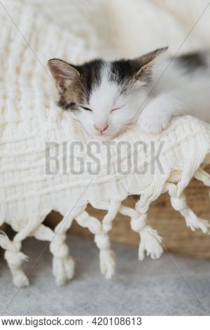 Cute Little Kitten Sleeping On Soft Blanket In Basket. Portrait Of Adorable Sleepy Grey And White Ki