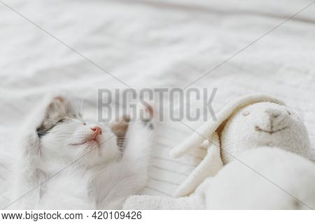 Cute Little Kitten Sleeping On Soft Bed With Bunny Toy. Adorable Grey And White Kitty Taking Nap And