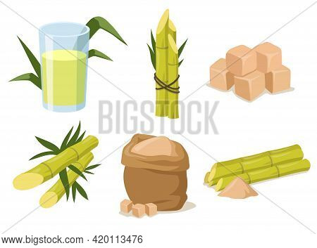 Cartoon Sugarcane With Stem And Leaves. Vector Illustration. Cane Sugar In Different Forms Like Cube