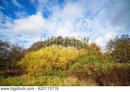 Colorful Nature Scene In A Wilderness Setting In Beautiful Colors With A Blue Sky Above