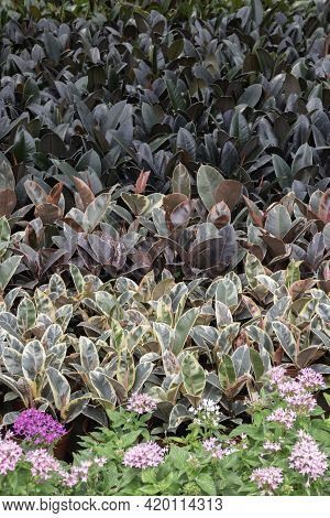 Chilled Out At Outdoors Plant Market, Stock Photo