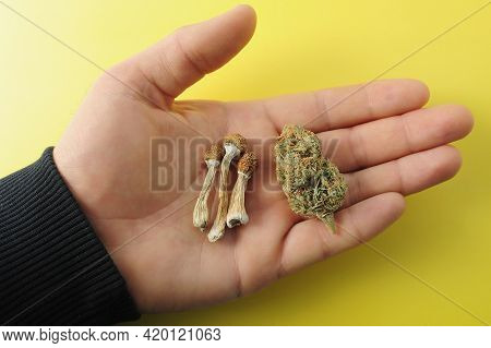 Micro-dosing Concept. Dried Psilocybe Mushroom And Cannabis Bud In Man's Hand On Yellow Background.