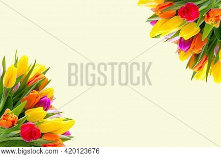 Spring Flower Background. Lovely Spring Tulip Flowers On Wooden Backdrop With Inscription Spring, Sp