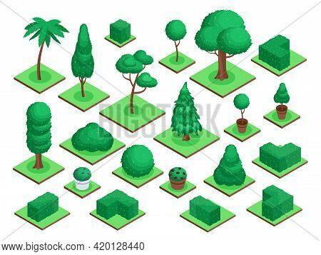 Isometric 3d Trees. City Park Or Forest Tree Plants, Bushes, Flowers Pots. Spruce, Palm Tree, Garden