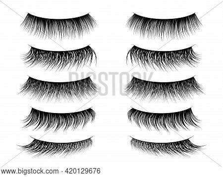 Lashes False. Realistic Fake Eyelashes Collection, Thick Long And Natural Lash On Closed Female Eye.