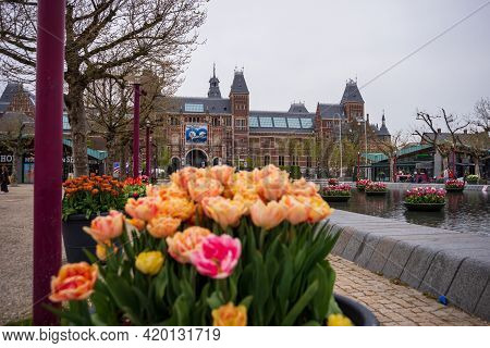 April 28, 2021, Amsterdam, Netherlands, Colorful Tulips In Pond In Front Of Rijksmuseum. Beautiful F