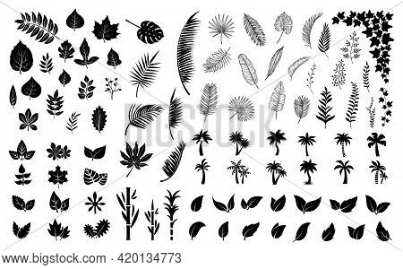 Leaves Silhouettes. Black Leaf, Palm Tree Foliage. Isolated Flat Planting Collection. Forest, Exotic