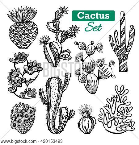 Decorative Different Types Of Cactus Icons Set With Thorns Black White Sketch Isolated Vector Illust
