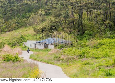 Unidentified Man Walking On Concrete Path Beside Old Rundown Abandoned House In Wilderness.
