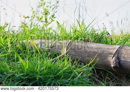 The Picture Of A Bamboo Piece Laid On A Green Meadow During The Evening Of The Day. The Light Of The