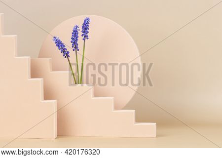 Trendy Spring Compositon With Geometric Shapes And Blue Muscari Flowers. Podium Platform For Product
