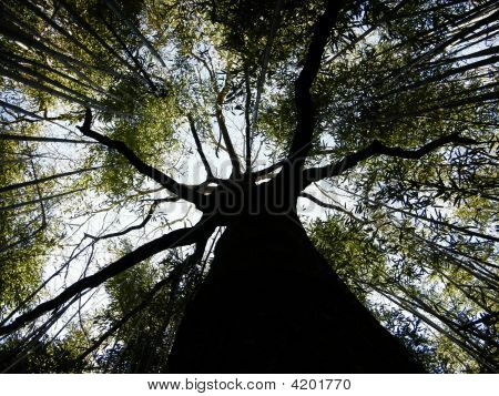 Tree Within Bamboo Forest