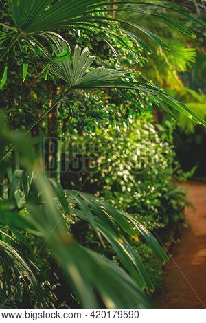 Beautiful Tropical Path, Green And Sunny, Lush Background.