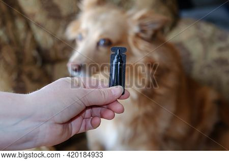 A Woman Hand Applies Dog Flea & Tick Drops To The Skin Of A Cute Red Mixed Breed Dog. Black Plastic