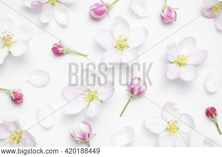Beautiful Delicate Fresh Spring Flowers, Buds, Green Leaves Of Apple Tree On White Background Top Vi