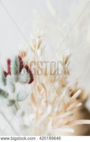 Dried Bunny Tail grass background