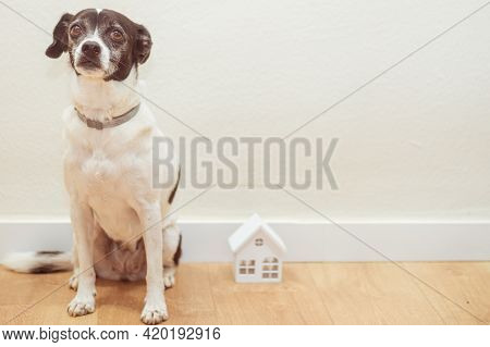 Photo Of Sweet Dog And Small White Wooden  House. Adoption And Pet Concept.