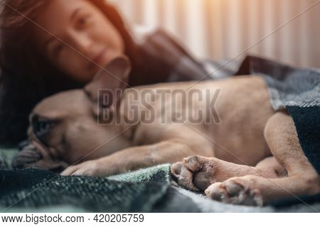 Female And Cute French Bulldog Dog Resting On Bed With Plaid At Cozy Home
