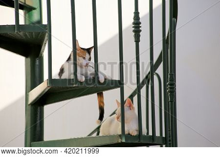 Two Cute Cats Endpannen Each Other Af A Spiral Staircase