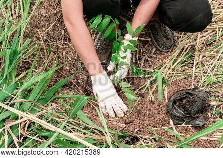 Close-up Of A Woman's Hand Wearing White Cloth Gloves, Planting Trees In The Forest, Concept For Env