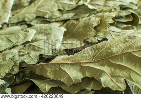 Dry Oak Leaves From A Russian Bath Broom Close-up. Selective Focus. Background Image
