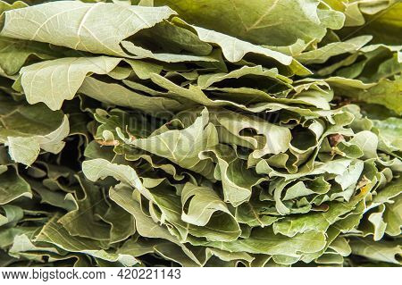 A Stack Of Dried Pale Green Oak Leaves From A Bath Broom. Background Image